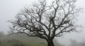 baretree